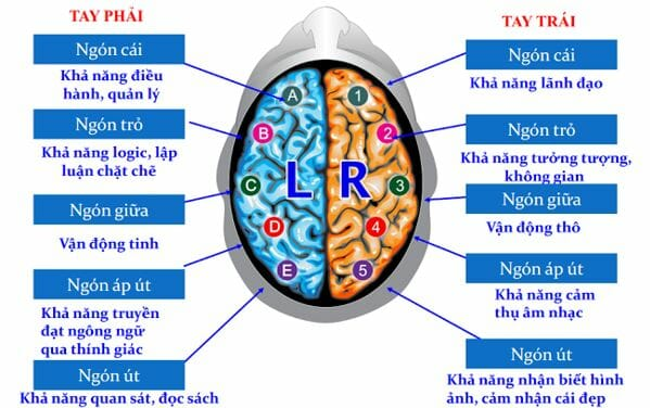 10 chức năng não bộ thông qua sinh trắc vân tay