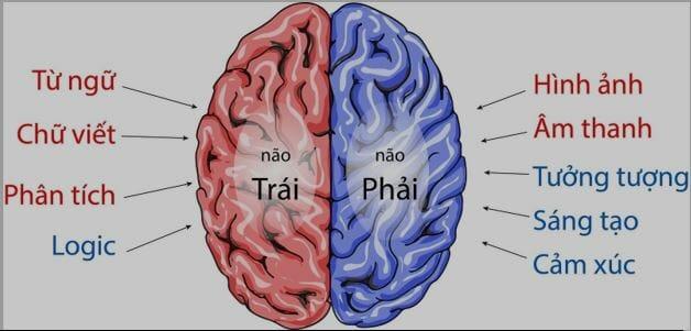 Tiềm năng của não bộ