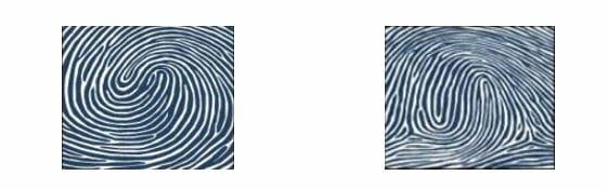 Chủng sinh trắc vân tay Whorl Double Loop